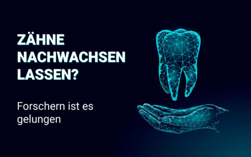 Zähne nachwachsen lassen? Forschern ist es gelungen